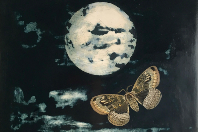 Moon Owl Moth 30x30cm